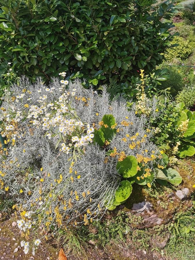 Jardin alpestre de la grotte Saint-Vit - Saverne- inspirations estivales
