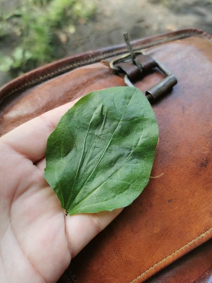 Plantain - inspiration estivale
